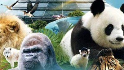 Le choix du best-of-breed pour le ZooParc de Beauval.